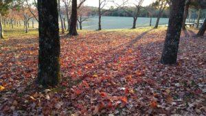 落ち葉の紅葉! 落ち葉の紅葉はまだまだこれから!